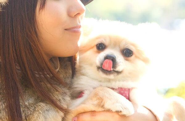 犬や猫のペットにもおすすめのケイ素水の健康サプリ